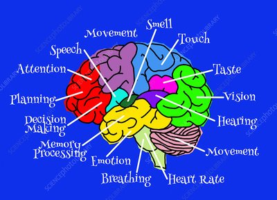 PSG209_Psikologi Kognitif (PSI - B)